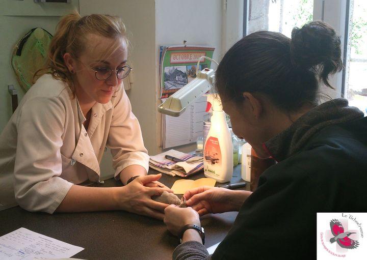 Le centre de soins du Tichodrome recrute deux soigneurs.ses