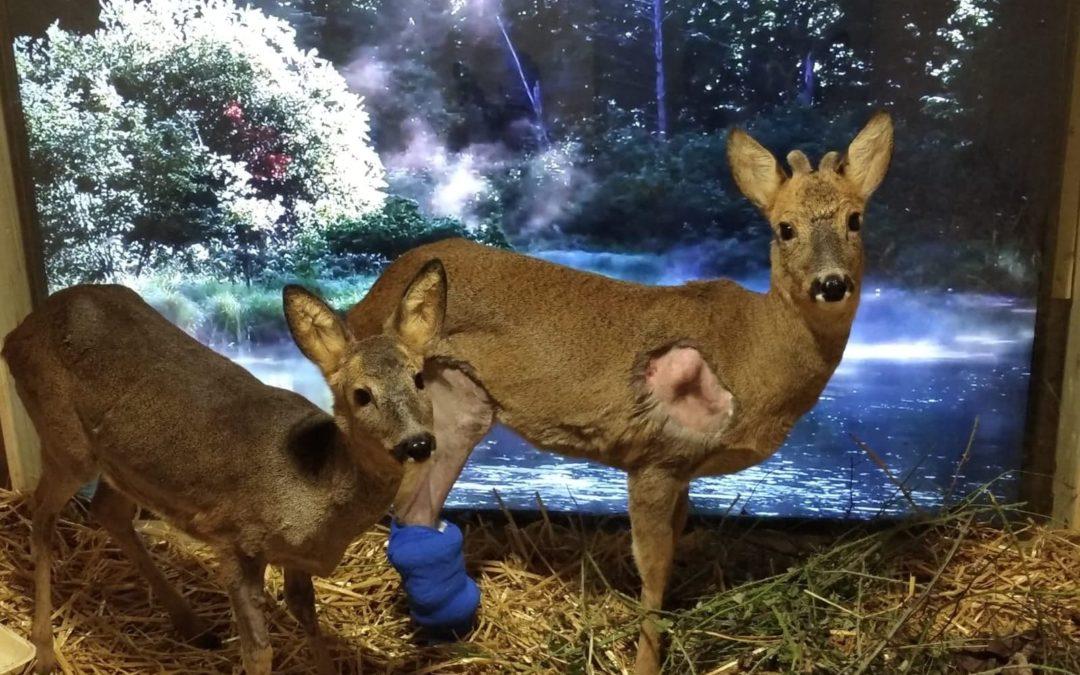 Parlons des problèmes des centres de soins faune sauvage sur RTL !